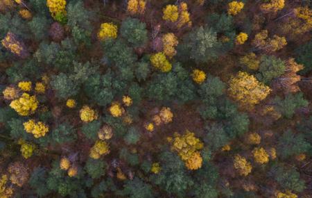 A fa a leggyakrabban használt építési anyag a világon és a felelős erdőgazdálkodással együtt ez az egyetlen megújítható építési anyag amink van...